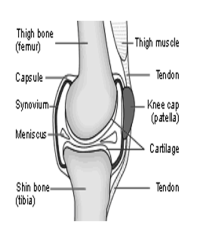 2(knee)